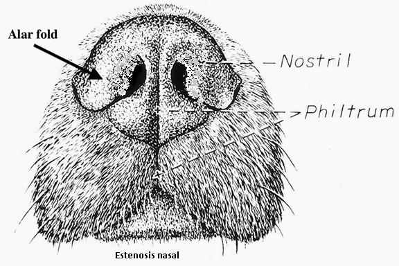 Fosas Nasales de un Perro