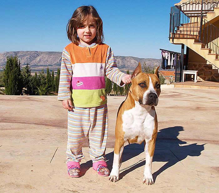 un AmStaff y una niña en el patio