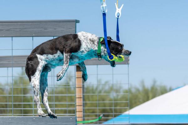 Perro practicando Buseo en Muello