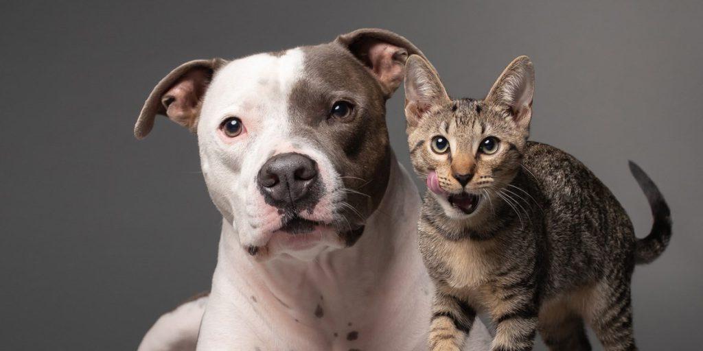 Pitbull con su amigo el gato