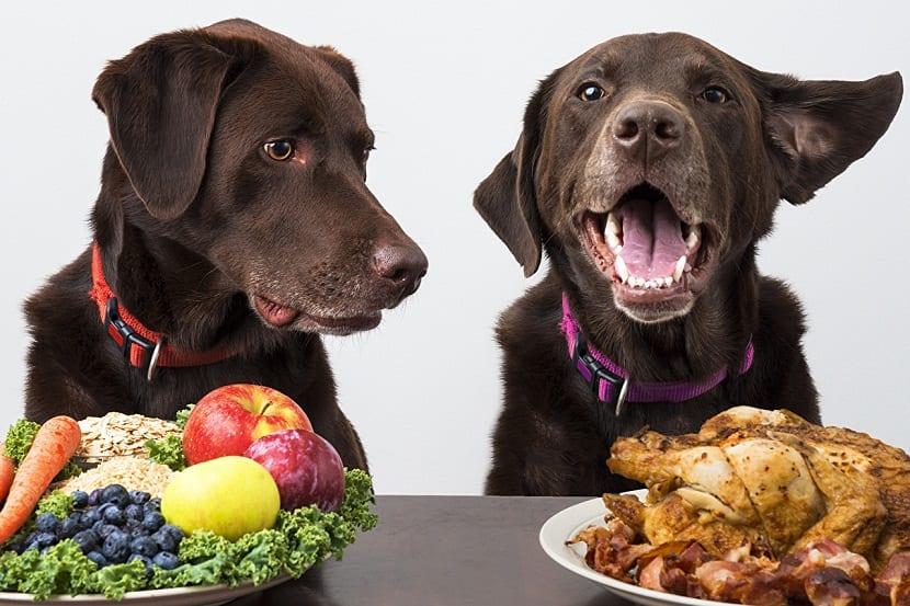 Vegetales vs Carne