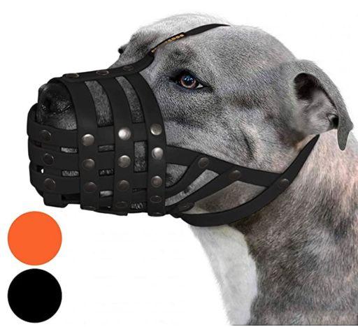 Bozal para perro Pitbull